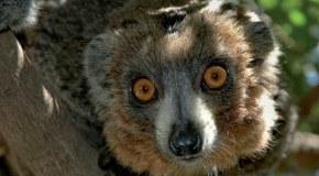 Tajomný Madagaskar